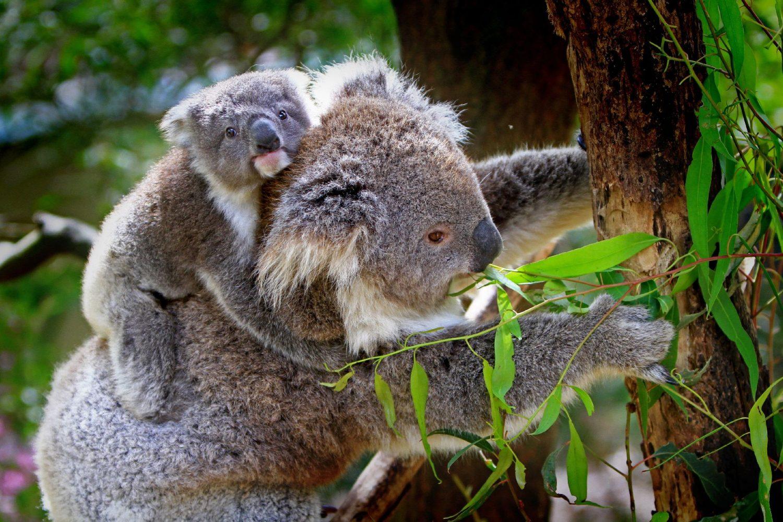 Екскурзия в Австралия