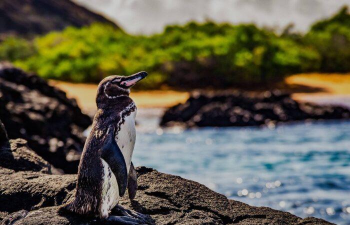 Екскурзия до Галапагоски острови